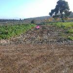Ο Οικοδομικός Συνεταιρισμός Απόστρατων Αξιωματικών εκμισθώνει αγροτικές εκτάσεις