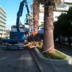 Κλάδεμα και καθαρισμός δέντρων στο κέντρο της Χαλκίδας